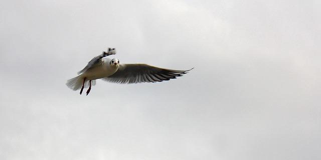 gull-50516_640